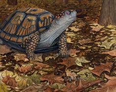 eastern box turtle, by Sarah Knight 8X10 open edition digital print | SunshineSight - Print on ArtFire