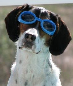 Gotta wear your goggles! Pool #pets