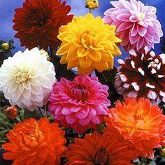 Resultados de la Búsqueda de imágenes de Google de http://cache2.ycomo.net/images/stories/jardineria/hierbas-y-flores/302x301xLos_tipos_de_flores_mas_bonitas3.jpg.pagespeed.ic.VBssOo3yZr.jpg