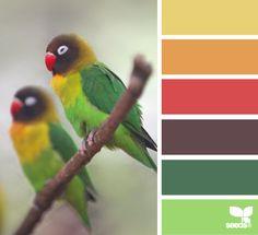 Lovebird hues