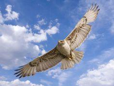 この世で最も美しい種族は鳥類である:ハムスター速報