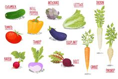 Vector Vegetables by shizayats on Creative Market