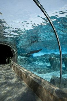 St Louis Zoo-Sea Lion tunnel seen on a visit by Emmaline and friends.