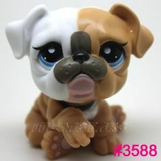 littlest pet shop bulldog <--- this is the cutest thing i've ever seen! O.O