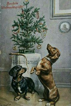 Фотография Noel Christmas, Christmas Cats, Retro Christmas, Christmas Greetings, Vintage Christmas Cards, Xmas Cards, Christmas Pictures, Vintage Dachshund, Vintage Dog