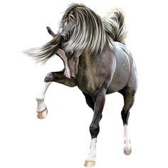 Azraël, Pferd Araber Hellgrau #7265937 - Howrse