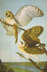 Audubon,  c.1860