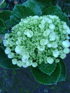 #flower #newlygrow #green #morning