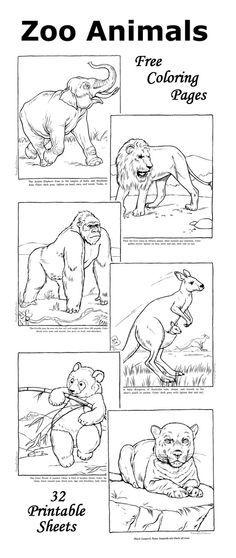 ANIMALES SALVAJES,CEBRA,LEON,COCODRILO,MONO,TIGRE,RINOCERONTE,JIRAFA ...