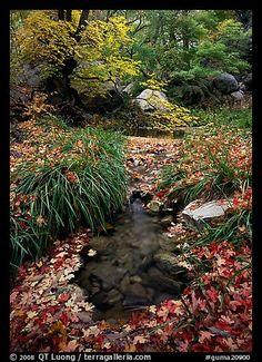 Stream in fall, Smith Springs. Guadalupe Mountains National Park,Part of gallery of color pictures of US National Parks by professional photographer QT Luong, available as prints or for licensing. Texas National Parks, American National Parks, Guadalupe Peak, Guadalupe Mountains National Park, Camping In Texas, Texas Vacations, Picture Photo, Great Places, Country Roads