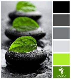Spa Mint: Black, Grey, Slate, Stone, White, Green, Apple - Colour Inspiration pallet