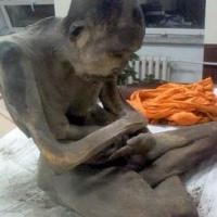Numerous Experts Agree That 200 Year Old Mongolian Mummy Isn't Actually Dead