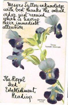 Suttons Seeds order acknowledgement postcard