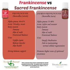 FRANKINCENSE vs SACRED FRANKINCENSE Frankincense is considered a prized oil by many and won't be without it their home.   If you've ever wondered how the Frankincense resin is obtained, watch this ...