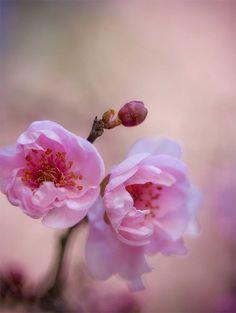 Flores que florecen, blossoming flowers