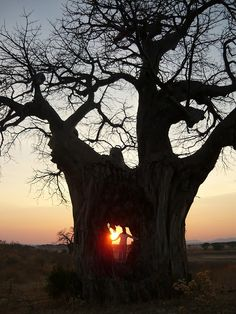 Ꭺℬℴv૯ Ꭺคɗ ℬ૯ყℴคɗ : only God, only in Africa.certainly a tree of Life. Le Baobab, Baobab Tree, Beautiful World, Beautiful Places, Out Of Africa, Nature Tree, Tree Forest, Jolie Photo, Tree Of Life
