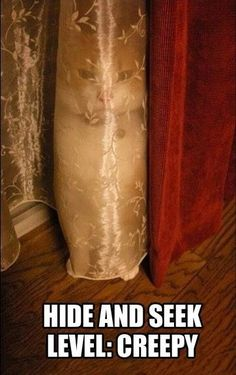 When I'm in the bathroom and see my cat like this behind the shower curtain...