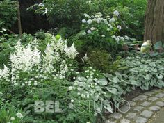 Love Your Lawn: Landscaping Ideas And Inspiration - House Garden Landscape Steep Gardens, Hosta Gardens, Back Gardens, Outdoor Gardens, Moon Garden, Dream Garden, White Plants, Woodland Garden, Small Garden Design