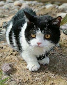 Grumpy Cat's brother, Pokey.