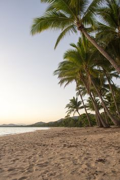Palm Cove Beach – Cairns, Australia – 2020 World Travel Populler Travel Country Palm Beach Australia, Cairns Australia, Australia Travel, Daintree Rainforest, Places To Travel, Places To Visit, Great Barrier Reef, Beach Aesthetic, Road Trip