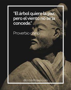 El árbol quiere la paz, pero el viento no se la concede - Proverbio chino #PROVERBIO CHINO#CHINO#PALABRAS#WISE WORDS#PALABRAS SABIAS#QU...