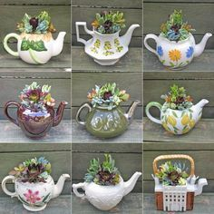 Great Idea! By Heritage Succulents