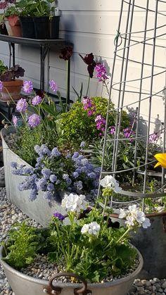 Garden Planters, Garden Art, Planter Pots, Garden Ideas, Container Plants, Container Gardening, Garden Borders, Yard Design, Front Yard Landscaping