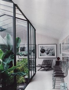 ° greenhouse in the office °