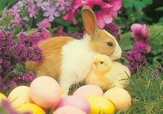 Easter 2014, Easter Art, Cute Wild Animals, Cute Bunny, Adorable Bunnies, Animal Pictures, Kittens, Creatures, Puppies