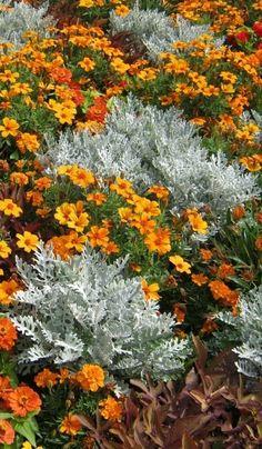 kwiaty w ogrodzie fot. Beautiful Flowers Garden, Love Garden, Lawn And Garden, Garden Shrubs, Garden Paths, Garden Landscaping, Potted Orchid Centerpiece, Exterior, Small Gardens