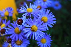 yellow on blue by magdalenahabiera