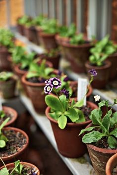 All Gardenista garden design and outdoors inspiration stories in one place—from garden tours and expert advice to product roundups. Primula Auricula, Primroses, Terracota, Buxus, Garden Projects, Garden Ideas, Dream Garden, Garden Inspiration, Garden Pots