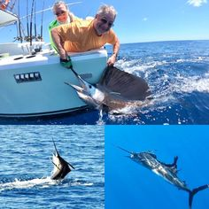Great to have Wayne & Eileene from the New York area.  After great success in recent days catching huge Tarpon on the Caribbean Coast of Costa Rica it was time to ticked off the bucket list. Wayne was delighted with 2 nice Sailfish, the largest measured 99 inches and est. 90lbs and a third Sailfish threw the hook.  #jackpotsportfishing #marinapezvela  #fishingincostarica #fishingcostarica Quepos, Sport Fishing, Costa Rica, Caribbean, Third, Coast, Bucket, Success, York