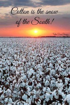 Cotton - Grandaddy Mac Murfee had the most beautiful cotton farm!  -McQueen Smith Farms