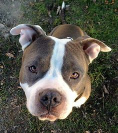 """I'm so in love with pittbull eyes, they are always like """"Don't worry anymore, I will allways be here just for you"""""""