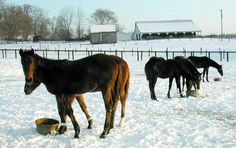 Responsible Horse Care for Winter and Summer