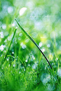 Sunday morning :) | Flickr - Photo Sharing! Easy Like Sunday Morning, Herbs, Green, Herb, Medicinal Plants