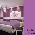 Great color choice for your bedroom walls found at Lowe's. Pantone Color of the Year 2014, Radiant Orchid.