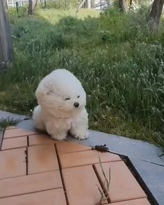 Cute Little Animals, Cute Funny Animals, Cute Cats, Big Cats, Cute Baby Dogs, Cute Puppies, Funny Animal Videos, Funny Animal Pictures, Videos Funny