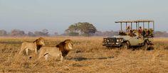 Want to visit kasaka river lodge, kiambi lower Zambezi lodge, Kulefu tented camp, myuu lodge accommodation and old mondoro camp Zambia-safaris.net. Visit: http://zambia-safaris.net/