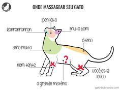 Aprenda a massagear seu gato!