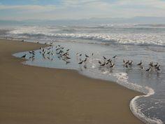 Pajaro Dunes, CA Monterey California, Monterey Bay, California Beach, Beautiful Vacation Spots, Beautiful Places, Great Memories, Dune, Beach House, Happiness