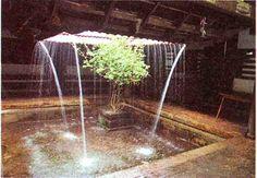 tulasi in courtyard house.