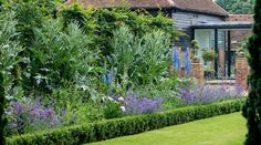 Classic english garden row of purple flowers