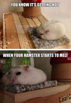 how to tell if hamster is too hot