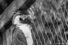 Projeto 365 Inspirações - FOTO 82  #365inspiracoes #peb #pretoebranco #blackandwhite #passaro #bird