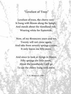 """Another version of one of my favourite poems: """"Loveliest of Trees"""" by A E Housman Alfred Edward Housman 26 March 1859 Bromsgrove, Worcestershire, England, United Kingdom Died30 April 1936 (aged 77) Loving this poem  Cambridge, England, United Kingdom Pen nameA. E. Housman OccupationClassicist & poet NationalityUnited Kingdom British"""