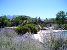 Corrales residence - rear pool, Russian Sage, Turpentine Bush, Arizona Buff flagstone (QUERCUS, 1996)