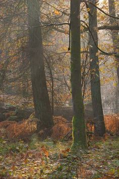 Peter Hulance /// Savernake Forest in Autumn