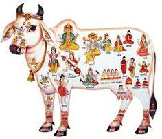 Cow Slaughter is a constitutional and religious sin as said by Supreme Court of India.